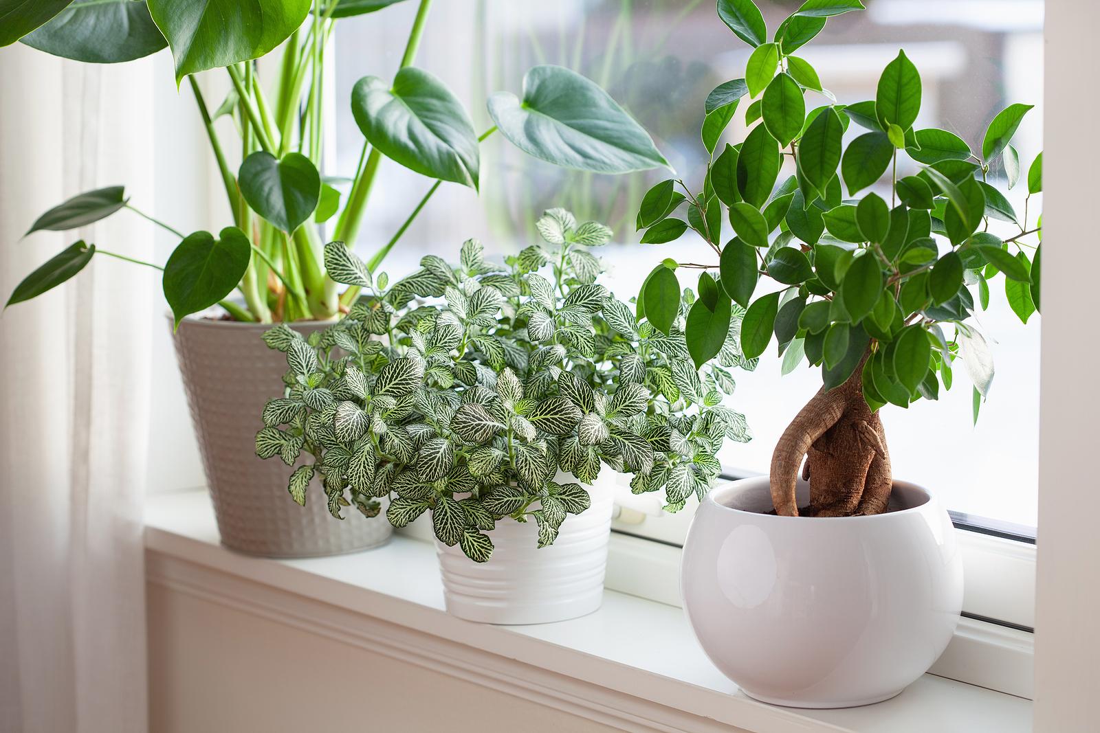 houseplants in window