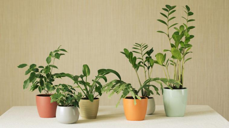 houseplants in pots