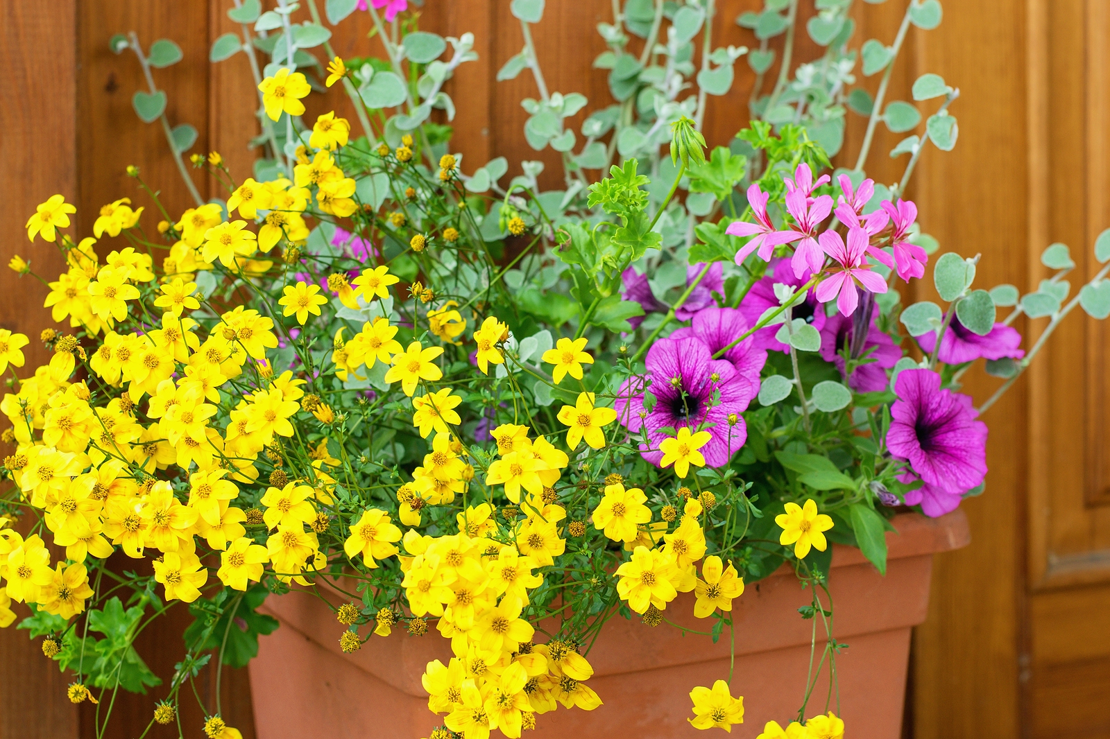 flowers in container