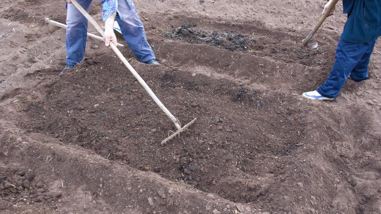 Preparing a planting bed